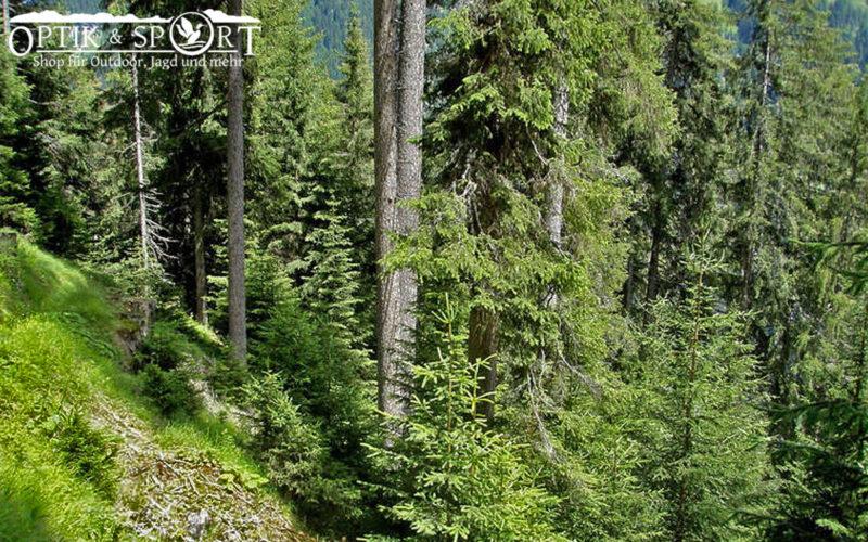Schutzwald Aufforstung